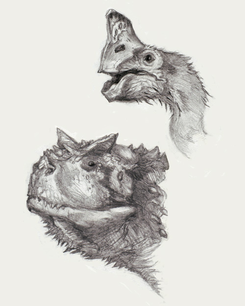 Therapod head study; Oviraptor and Carnotaurus