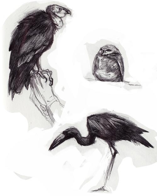 zoo_birds1.jpg