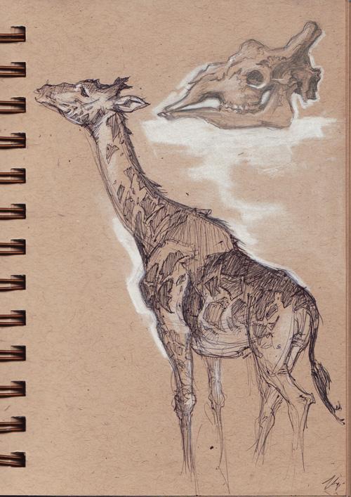 zoo_giraffe.jpg