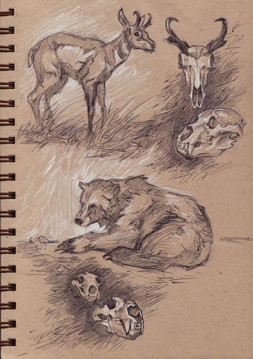mammals_northamerica.jpg