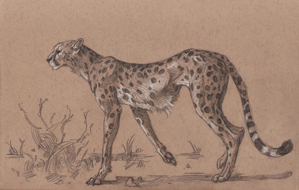 cheetahlores.jpg